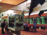 Tropenhaus 1978