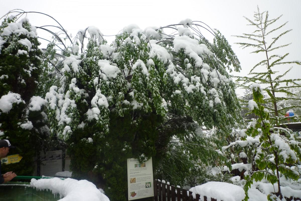 Wintereinbruch 28 04 16 (3)