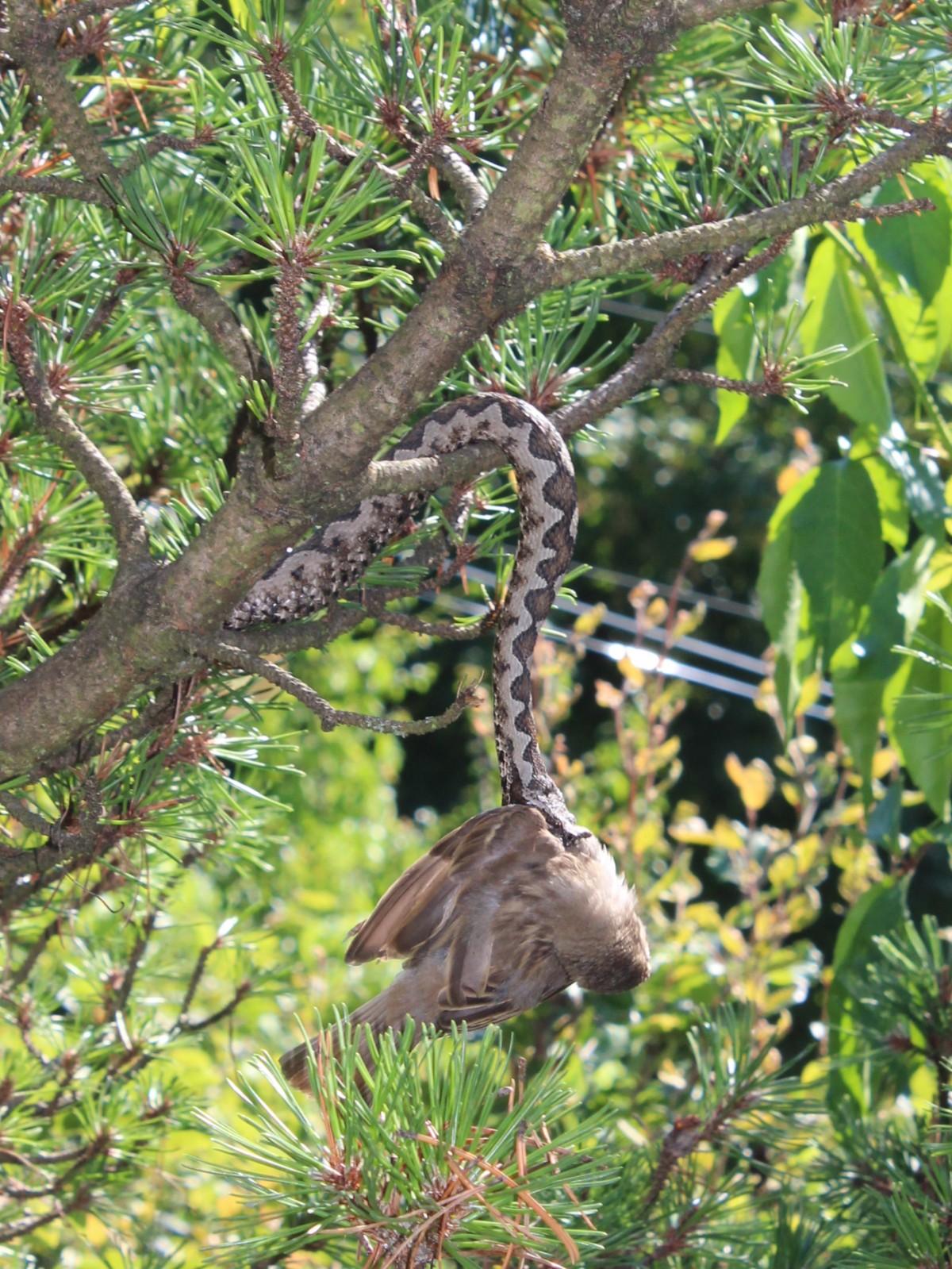 Hornotter vogel