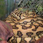 Snakes | HAPP's Reptilienzoo